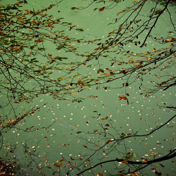 Elswout 9 nov 2014, foto door Jorinde Reijnierse